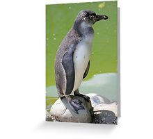 Zürich Zoo, Pinguin Greeting Card