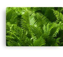 Ferns Canvas Print