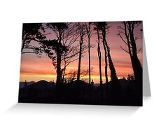 Scots Pine Sunrise Greeting Card