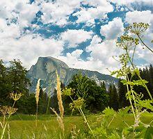Yosemite National Park by Jerome Obille