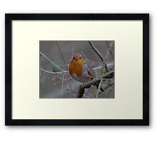 Robin for Christmas Framed Print