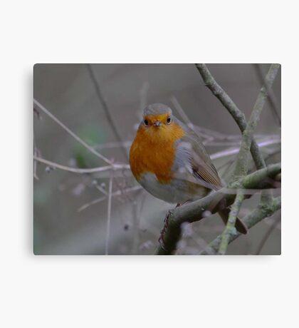 Robin for Christmas Canvas Print