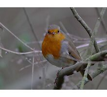 Robin for Christmas Photographic Print