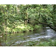 Woodland streams Photographic Print