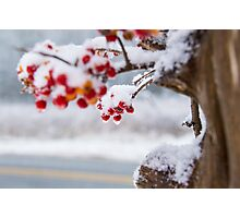 Christmas Berry Photographic Print