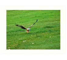 Red Kite Talons Extended Art Print