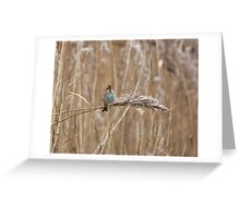 Reed Bunting on Reed Greeting Card