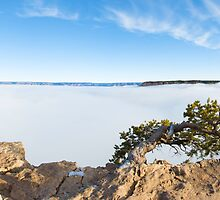 Grand Canyon rare foggy scenery - panoramic by Jerome Obille