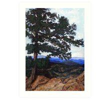Flagstaff Mountain Tree Art Print