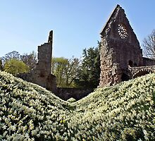 Dryburgh Abbey Daffodils by Escocia Photography