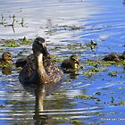 Mother Duck with adorable family by Ronee van Deemter