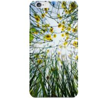 Dandelions from below iPhone Case/Skin