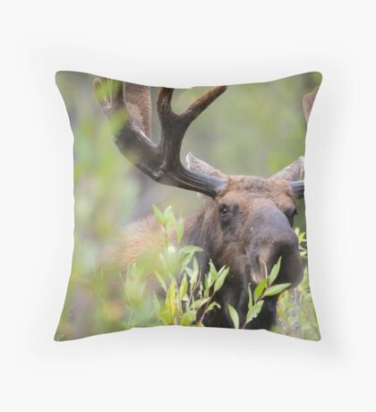 Bull Moose Smelling Bushes Throw Pillow
