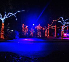 Enchanted Entrance Wildlights, Woodland Park Zoo  by Ian Phares