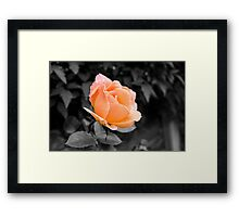 Passion Peach Framed Print