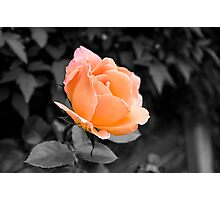 Passion Peach Photographic Print