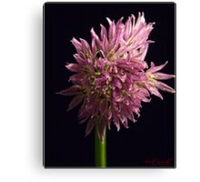 Guess What? (3) Canvas Print