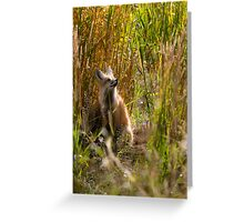 Red Fox Looking Up in Tallgrass Greeting Card
