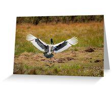 Flight of the Jabiru Greeting Card