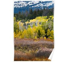 Snow and Fall Aspens Poster
