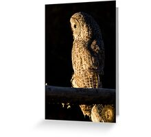 Perched Great Gray Owl Greeting Card