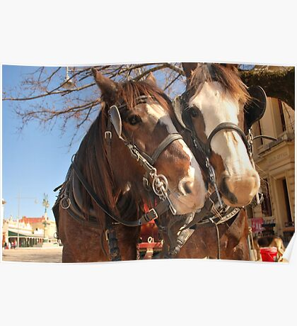 Horsey love Poster
