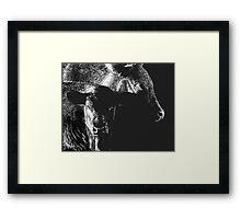 Black Cows Framed Print