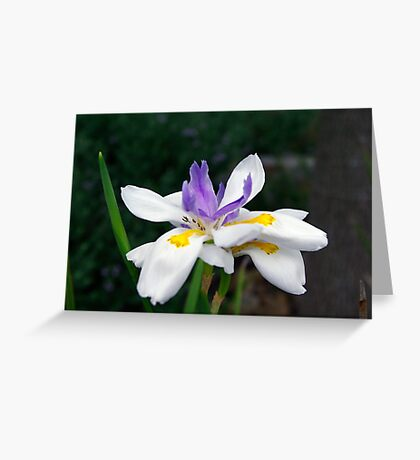 Touch Of Purple By Colleen Stevenson Greeting Card