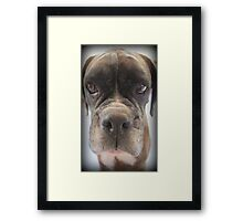 Are There Any Choc Cookies In There? Framed Print