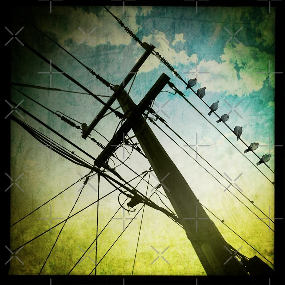 Birds on a Wire by Vin  Zzep