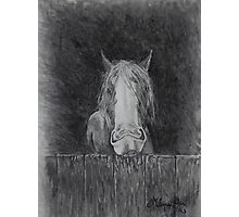 Toby the Bored Clydesdale Photographic Print