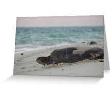 Back to the Sea Greeting Card