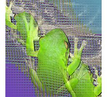 The Real Frogger Photographic Print