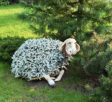 Flower bed garden sheep by mrivserg