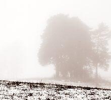 11.12.2013: Rural Landscape by Petri Volanen