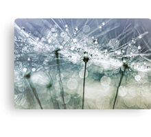 Blowball Bokeh Boogie.... (II) Canvas Print
