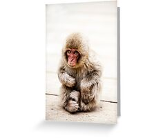 Snow Monkey - Jigokudani Monkey Park, Japan Greeting Card
