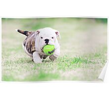 Whoever said you can't buy happiness forgot about little puppies Poster