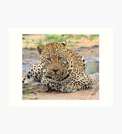 A big dominant leopard Art Print