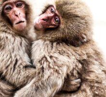 Snow Monkeys - Jigokudani Monkey Park, Japan Sticker