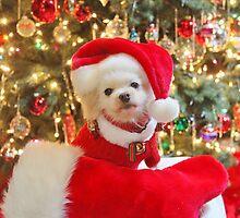 Merry Christmas 2013 by mauli