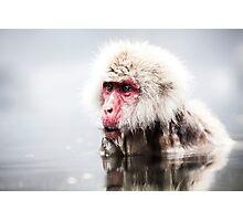 Snow Monkey - Jigokudani Monkey Park, Japan Photographic Print