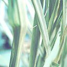 Soft Grass by PhosGraphe