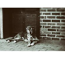 Old dog on Sidewalk Photographic Print