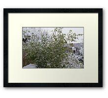 Snowy Bamboo  Framed Print