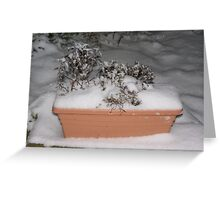 Smothered in Snow  Greeting Card