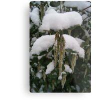 Droop in White Snow  Metal Print