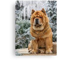 Chow dog Canvas Print