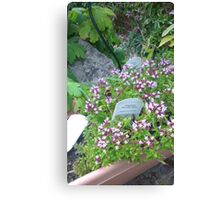 Garden Bee  Canvas Print