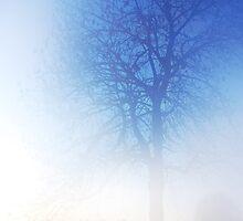 Sun, Fog and Snow by Imi Koetz